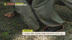 네 발로 산 타는 호랑이 전신 운동👉🏻 '호보법'   JTBC 210611 방송