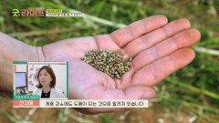 자연 식욕억제제라고도 불리는 '대마종자유' 속의 화합물   JTBC 210618 방송