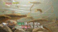 1급수에서만 볼 수 있는 귀한 물고기 '버들치 잡이'   JTBC 210625 방송