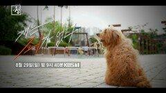 [예고] 창 341회 : 개는 죄가 없다 | KBS 방송