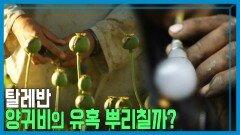 탈레반, 양귀비 재배 근절 선언. 과연?   KBS 210904 방송
