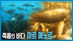 죽어가는 지중해, 마르 메노르를 살려주세요   KBS 210911 방송