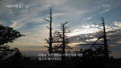 구상나무의 경고 | KBS 210916 방송