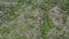 기후변화에 가장 취약한 한라산 고산지역 | KBS 210916 방송