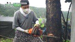 비오는 날, 골칫덩이 나무 베기!   KBS 211001 방송