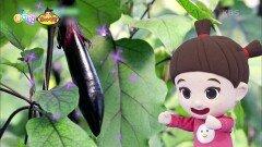 [꼬야식당] 오늘의 재료! 반짝반짝, 길쭉한 보라색 가지♪ | KBS 210609 방송