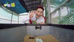 [슈퍼강이] 강이는 과연 달걀을 무사히 구해올 수 있을까?! | KBS 210610 방송
