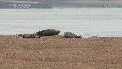 가로림만을 지켜준 친구, 점박이 물범   KBS 211017 방송