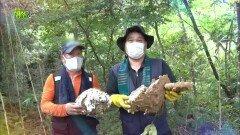 말벌이 만든 보물? 대물 노봉방을 찾아라!   KBS 210915 방송