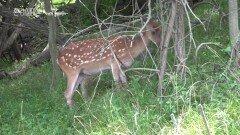 안마도 사람들에게 적이 된 사슴들? | KBS 210916 방송