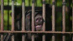 반복되는 반달가슴곰의 사육장 탈출, 그 이유는? | KBS 210916 방송