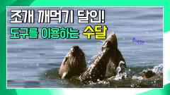 도구를 이용하는 수달의 놀라운 능력 [생존의 대가, 수달 Supercharged Otters]