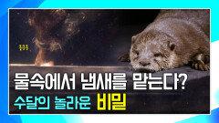수달이 어두운 물속에서 먹이를 찾을 수 있는 비결 [생존의 대가, 수달 Supercharged Otters]