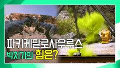 박치기 공룡, 파키케팔로사우루스의 박치기 파워는? [공룡의 왕국 Deadly Dinosaurs]