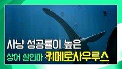 바다 환경에 알맞은 몸을 가진 심해의 생물, 키메로사우루스 [공룡의 왕국 Deadly Dinosaurs]