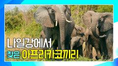 나일강에서 아프리카코끼리 가족을 찾은 앤디 [앤디의 수중 탐험]