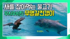 새를 잡아먹는 물고기 무명갈전갱이 [앤디의 수중 탐험]
