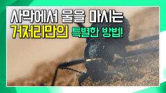 거저리가 사막에서 물을 마시는 특별한 방법? [앤디의 사파리 탐험]