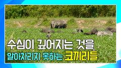 경고하는 소리로 코끼리들을 산으로 이동시키는 앤디 [앤디의 사파리 탐험]