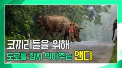 안전하게 코끼리 떼를 육지로 이동시킨 앤디 [앤디의 사파리 탐험]
