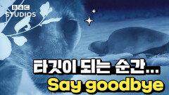 [빅캣_Big_Cats_2-1] - 재규어의 사냥