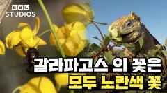 [갈라파고스_GALAPAGOS_2-2] - 갈라파고스에는 노란 꽃만 있다?