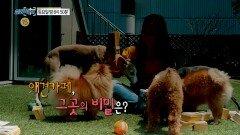 <애견카페, 그곳의 비밀은?>131회 예고, MBC 210612 방송