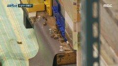 도심에서 양봉을 하는 남자, 벌에 쏘인 주민 , MBC 210619 방송