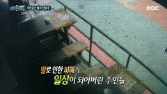 주민들은 벌과의 전쟁 중, MBC 210619 방송