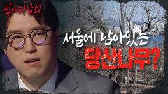 """""""당집이 도대체 뭐야?"""" 서울에도 남아있는 수호신 나무 '당산나무', MBC 210429 방송"""