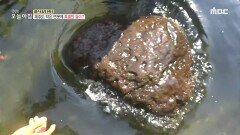 제주도 작은 연못에 특별한 돌이?, MBC 210608 방송