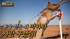 수많은 사람을 살린 영웅 쥐, 마가와!, MBC 210711 방송