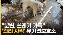 '분변 가득'한 유기견보호소…민간시설이라 관리 사각지대 [이슈픽]
