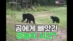 곰에게 빼앗긴 공놀이 시간?!