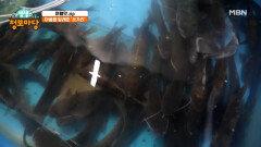 아픔을 달래준 '쏘가리' MBN 210923 방송