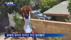 [픽뉴스] 곰 퇴치 소녀 / 우한 연구소 박쥐 / 머스크 아기상어