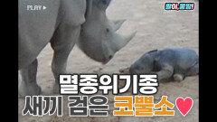 '멸종위기종' 검은 새끼 코뿔소 좀 보세요❤️