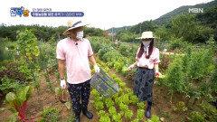 개미와 베짱이?! 홍록기와 김아린의 우당탕 주말농장! MBN 210729 방송