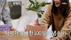 100일 기념으로 귤나무 선물한 스케일 큰 탁재훈 MBN 201210 방송