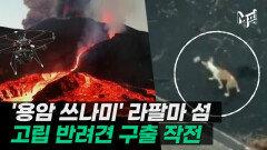 '용암 쓰나미'에 고립된 동물 구조…드론 활용·인공호흡도 [엠픽]