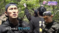 '두릅 박사' 유오성, 자연산 두릅 나무 발견에 신남!