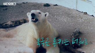 북금곰 통키는 더워요