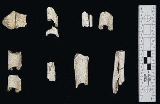 在石村洞古坟群整理出4.3公斤火葬人骨,首次确认百济王室的葬礼文化