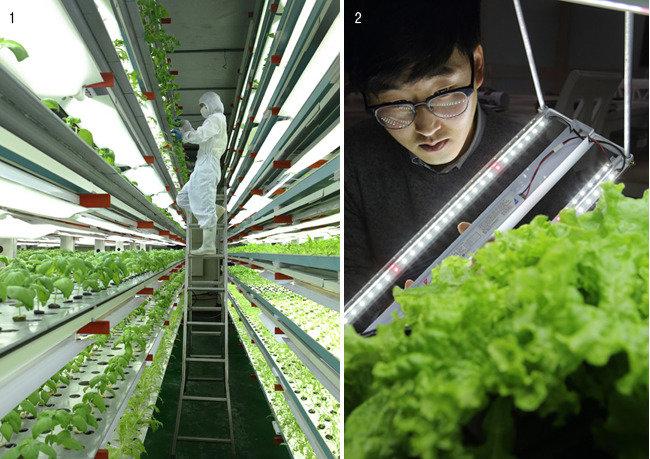 실내에서 펼쳐지는  미래 농업