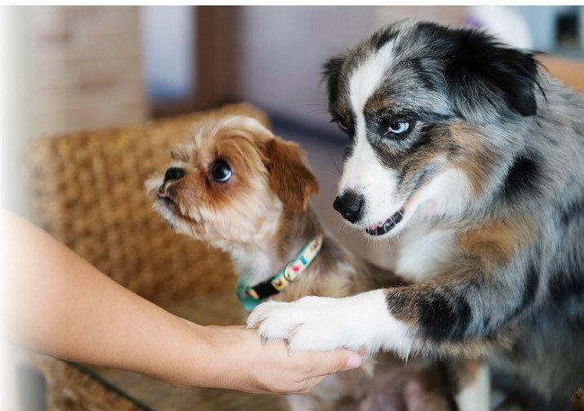 사람에게 버림받고 사람 위해 사는 犬生