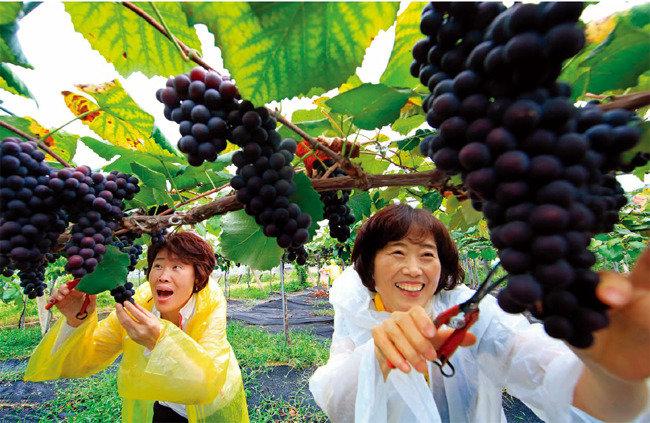 한 잔의 와인 가을날의 여유