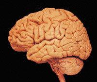 배울수록 뇌는 깊이 잠든다