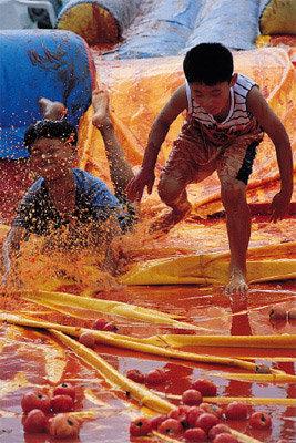 화악산 찰토마토 축제