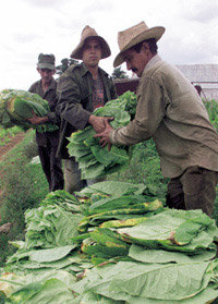식량난 북한·환경난 남한, 쿠바  유기농업 벤치마킹 하라