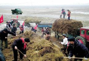 남북농업협력사업 '우리 밀 프로젝트' 시동